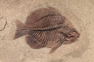 3262088_Fossile