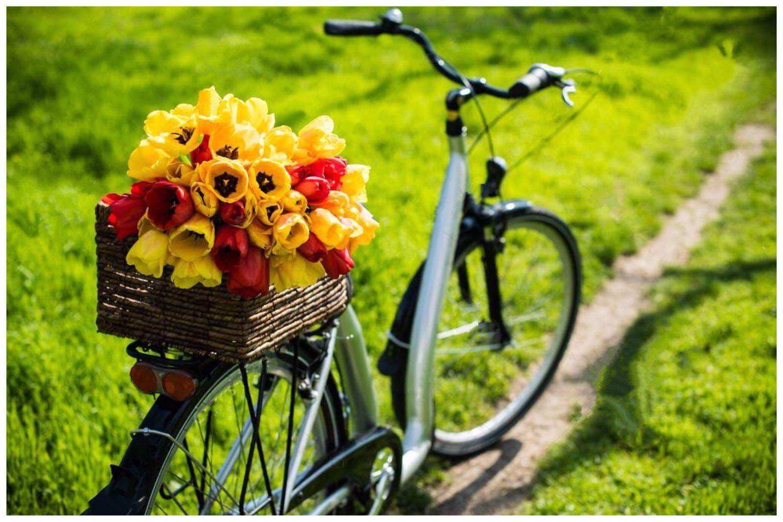 I-lavori-in-giardino-a-settembre-la-cura-e-i-fiori-da-seminare